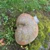 Betongrumpa, betong, naturlig patinering (mossa och alger)